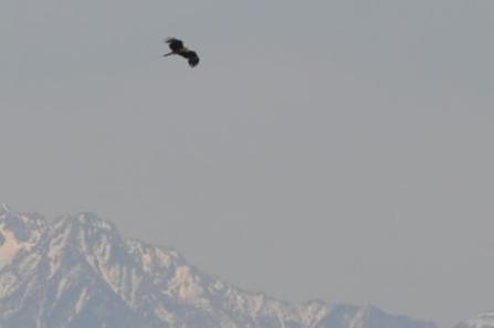 ⑦鳥と雪山