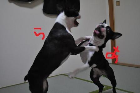 20.お相撲