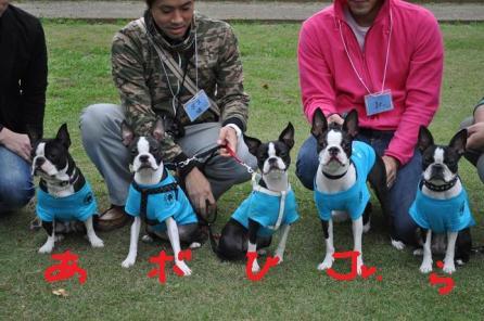 整列171犬