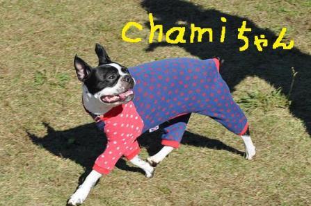 4.chamiちゃん