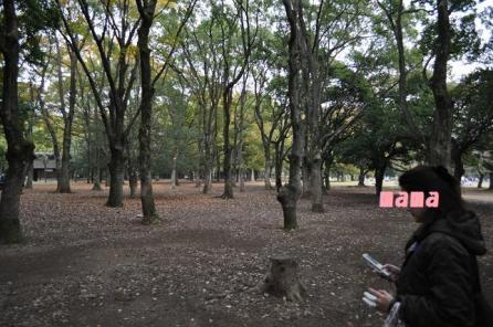 生い茂って013木々が
