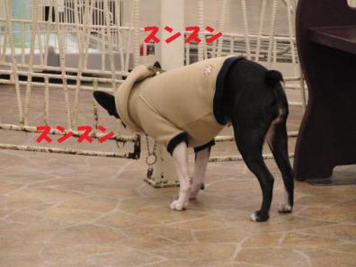 にほいちぇっく027