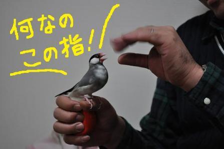 11.この指