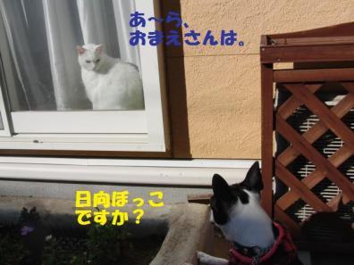 みみちゃんとごあいさつ038
