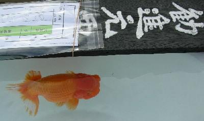 2513 錦 勧2