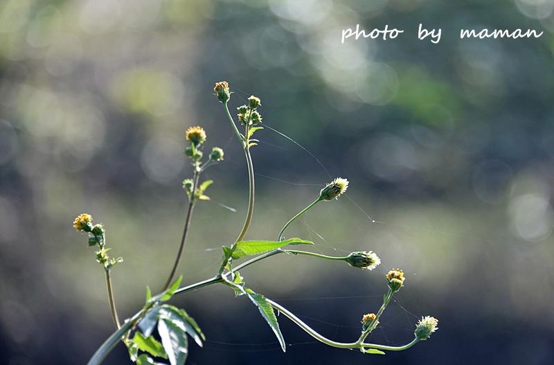 CAA_0092.jpg