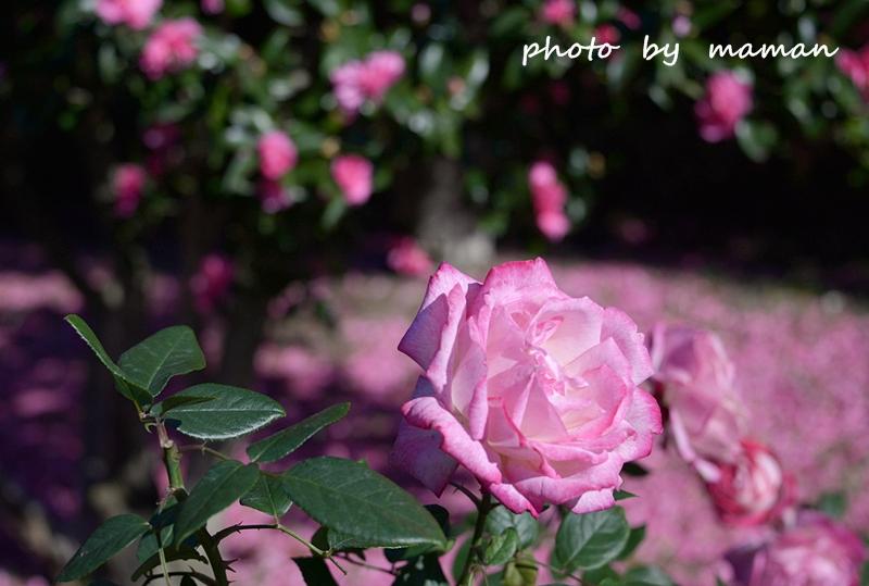 CAA_0265.jpg