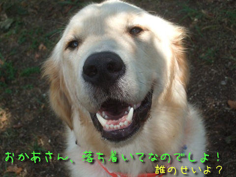 DSCF4002_20110815133256.jpg