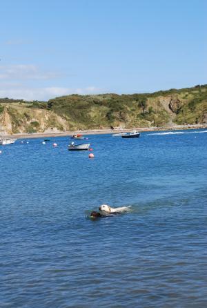 Dorset16.jpg