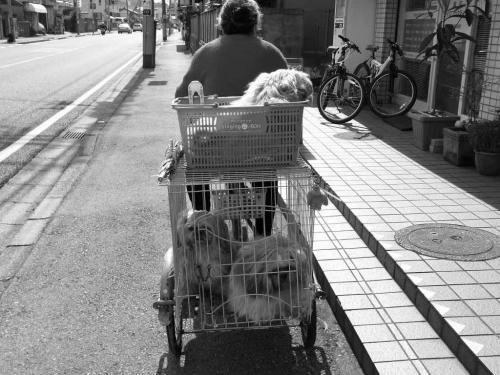 犬のサイクリング R0010036
