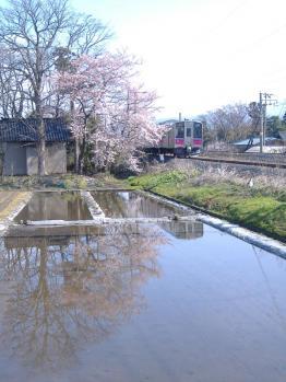 20110425yuzasakurato535mn104.jpg