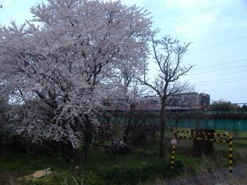 20110430gakkougawa535m.jpg