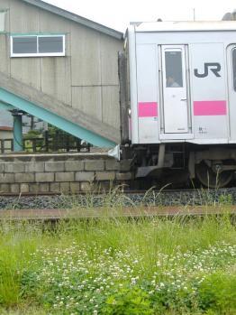 20110603fukura535mn105.jpg
