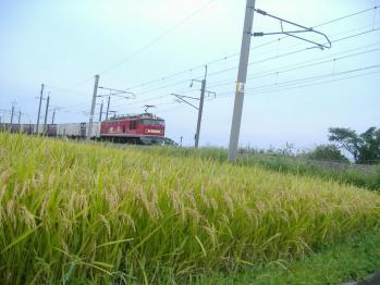 20110917sagosi4060re.jpg
