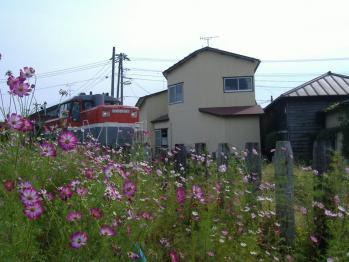 20110926sakataminatoiri1.jpg