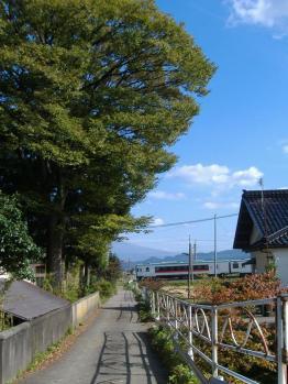 20111011baranofumikiri.jpg