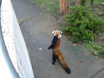 4ressa-panda.jpg