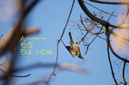 ブログ用IMG_2088_R