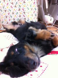 おぼっちゃま寝姿