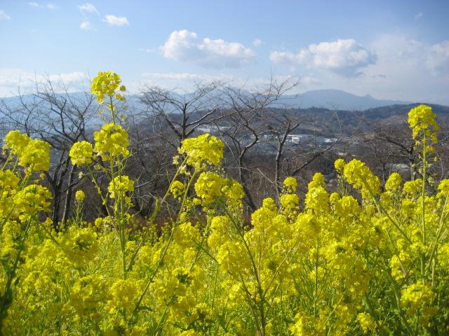 吾妻山公園 023