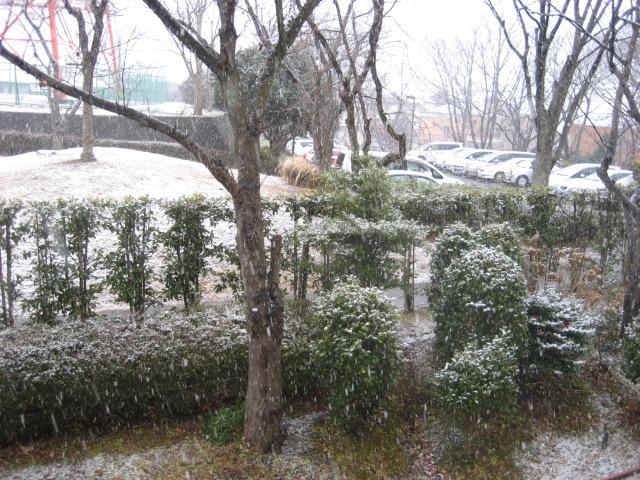 2011初雪 002