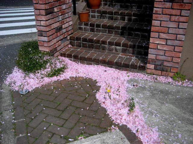 桜散る005