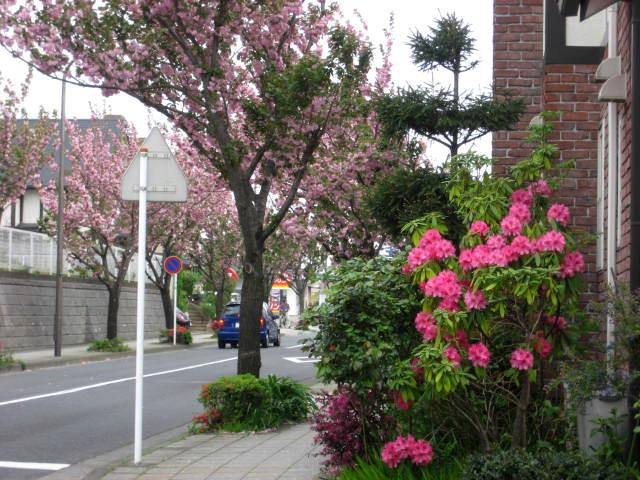 桜散る003