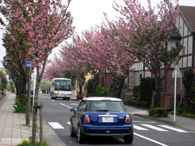 桜散る002