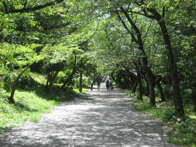 弘法山 018