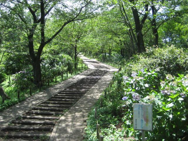 弘法山 020