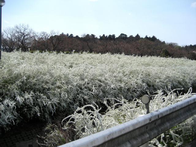 kairakuen-yukiyanagi080405small.jpg