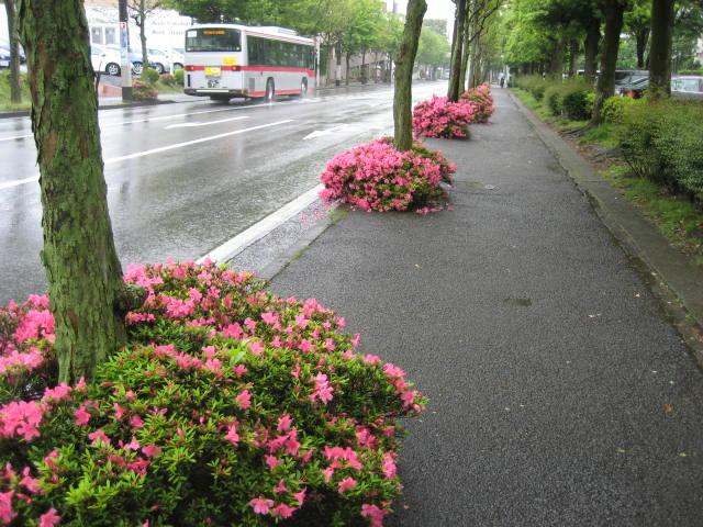 satsuki02.jpg
