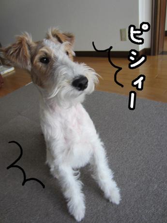 1_20130213170236.jpg