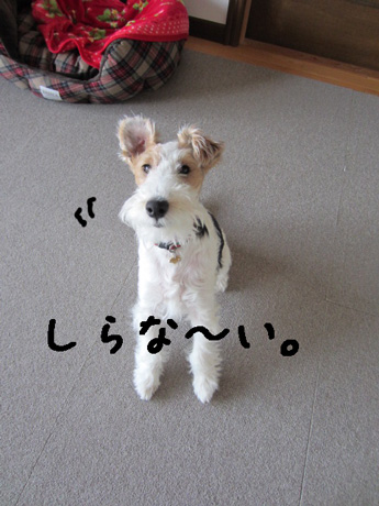 1_20130303175718.jpg