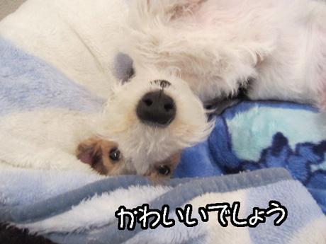 3_20130123152449.jpg