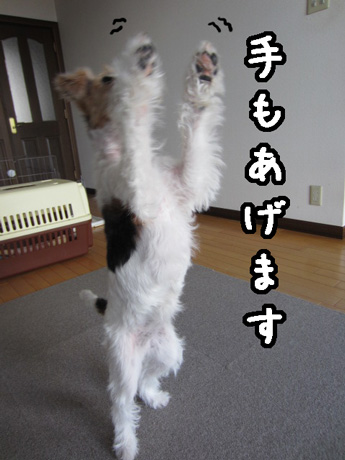 3_20130213170235.jpg