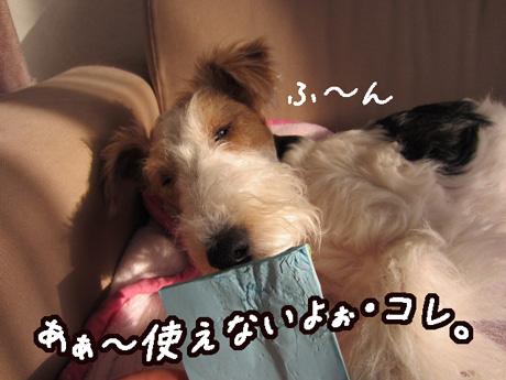 3_20130227163724.jpg
