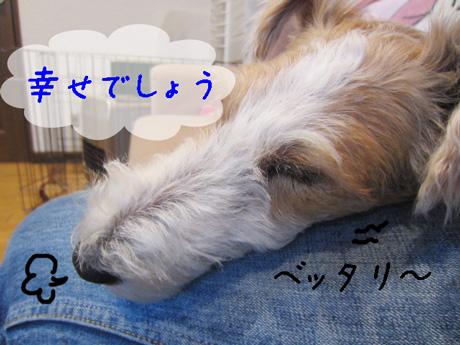 3_20130301151236.jpg