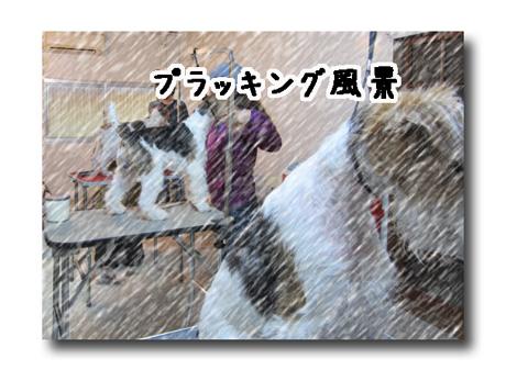 3_20130311174433.jpg