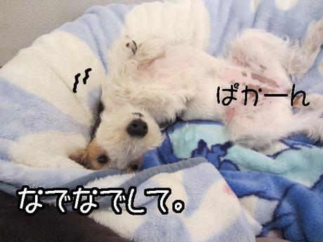 3a_20130123152447.jpg