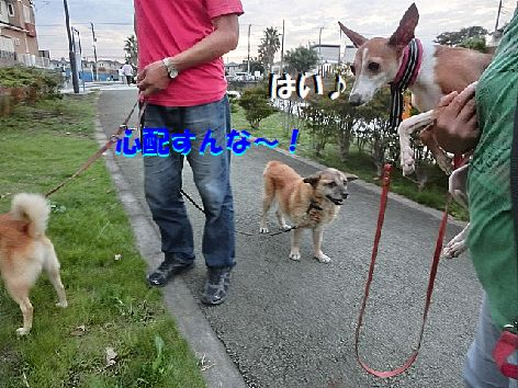e_201409212220298b9.jpg