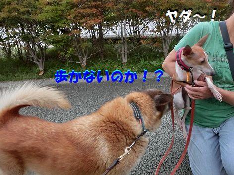 f_20140921222029946.jpg
