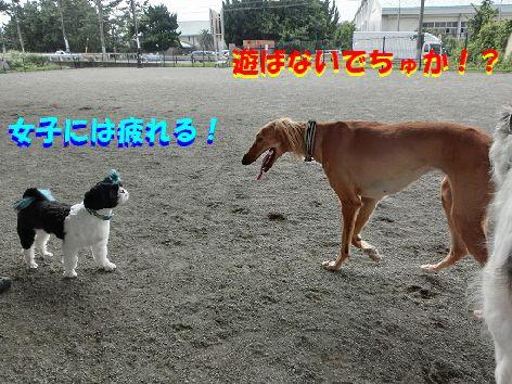 h_20140918232329084.jpg