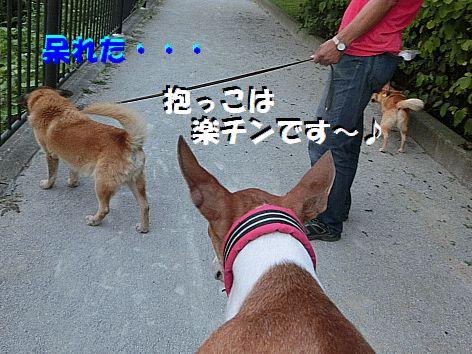 h_20140921222230cc5.jpg