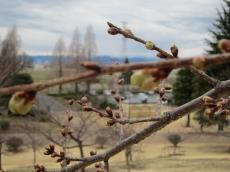 春よこい!