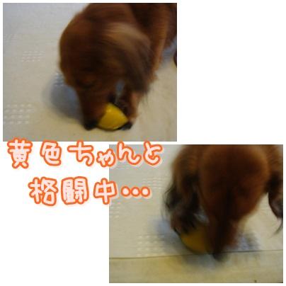 cats_20130407214602.jpg