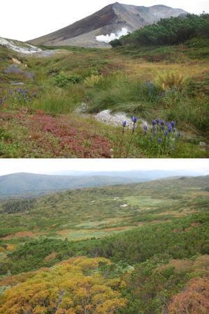 旭岳山頂紅葉
