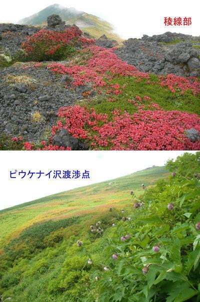 旭岳山頂紅葉2