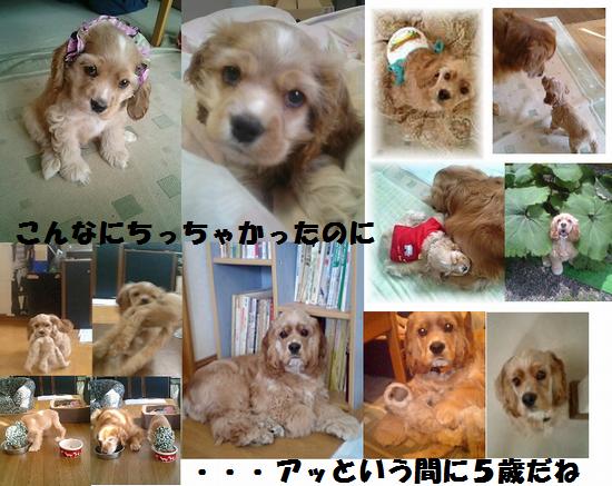 コニー子犬