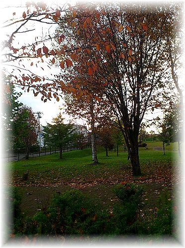 日の出公園紅葉1
